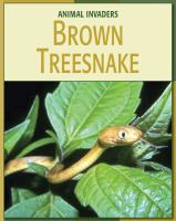 Go to record Brown Treesnake